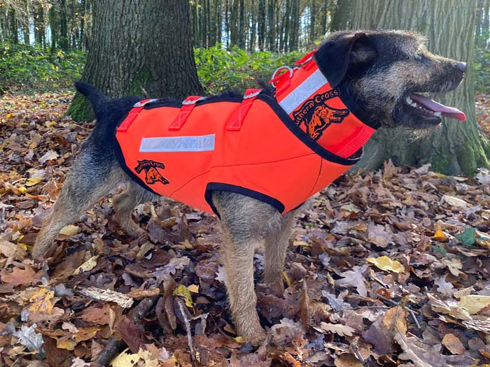 border-patterdale-terrier-sauenschutzweste-2