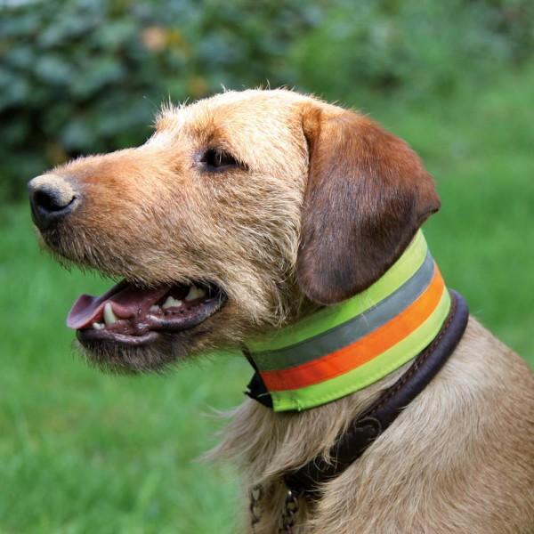 Reflektierendes Halsband für Hunde 1